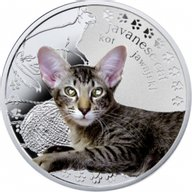 Javanese cat Man's Best Friends – Cats Proof Silver Coin 1$ Niue 2014