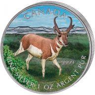Canada 2013 5$ Antelope Wildlife Series UNC Silver Coin