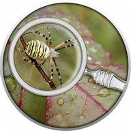 Wasp Spider The Secret Garden Proof Silver Coin 500 Francs Cameroon 2020