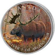 Canada 2012 5$ Moose Wildlife Series UNC Silver Coin